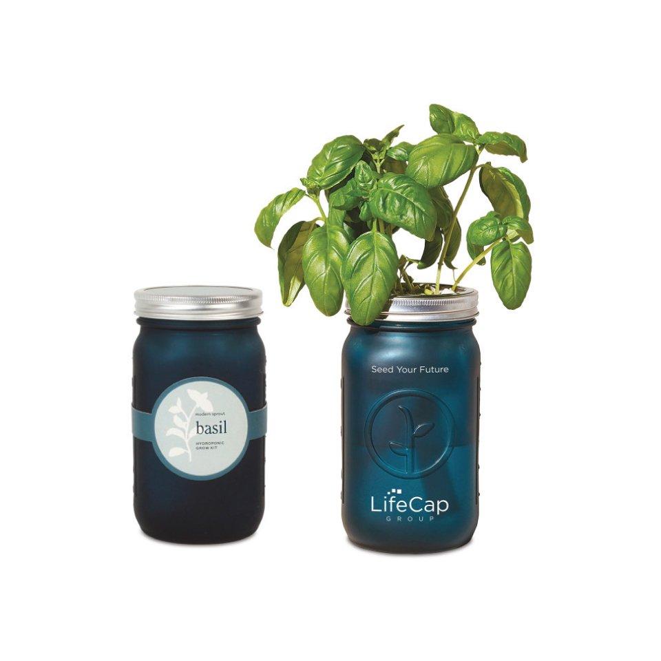 Modern Sprout Indoor Herb Garden Kit